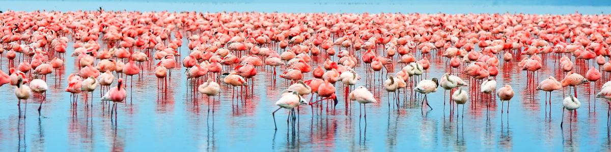 Samsons-Safaris-in-Kenya