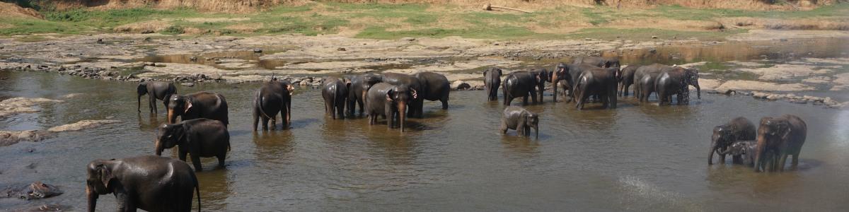 U-Wild-Holidays-SL-(Pvt)-Ltd.-in-Sri-Lanka