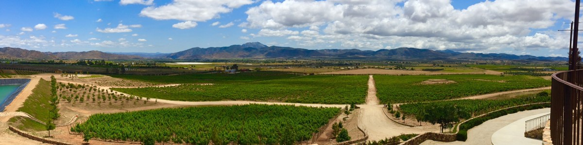 The-Wine-Route-in-Mexico