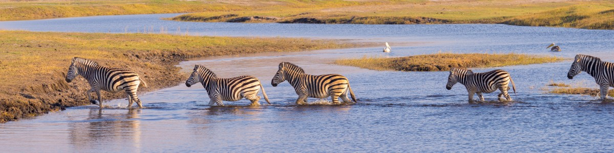 Little-Roz-Safaris--And-Tours-in-Zimbabwe
