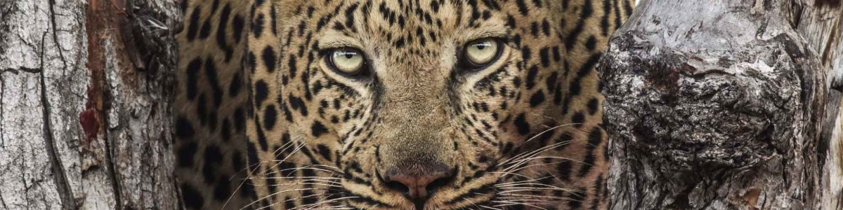 Bush-Whisper-Expeditions-in-South-Africa