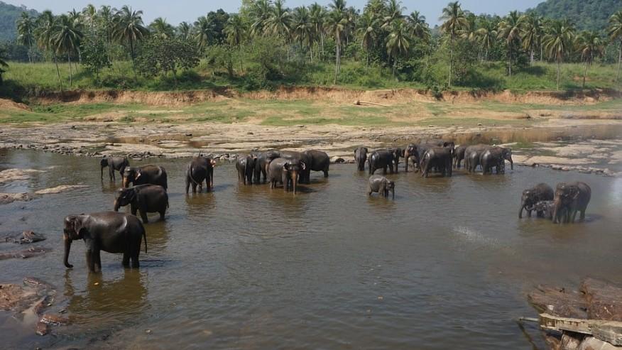 Spend an Amazing Week in Sri Lanka