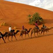 ismail-marrakech-tour-guide