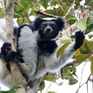 ampanotours-antananarivo-tour-guide