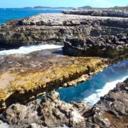 gordonfinch-antiguaandbarbuda-tour-guide