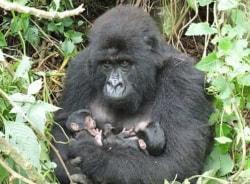 tulihabwe-bwindiimpenetrablenationalpark-tour-guide