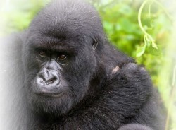 john-kampala-tour-guide