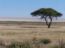 hentie-windhoek-tour-guide