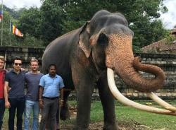 seesrilanka-kandy-tour-guide