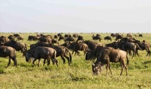 lutaaya-bwindiimpenetrablenationalpark-tour-guide