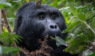 tumwesigye-kampala-tour-guide