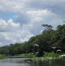 rosavillacorta-iquitos-tour-guide