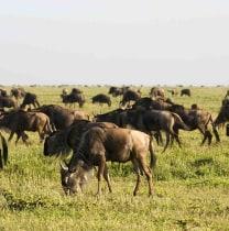 lutaayafred-bwindiimpenetrablenationalpark-tour-guide