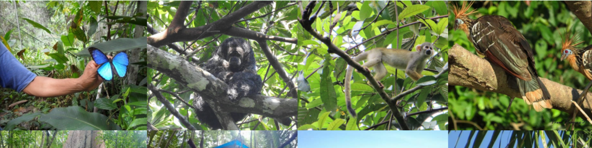 Macaw-Jungle-Expeditions-in-Peru