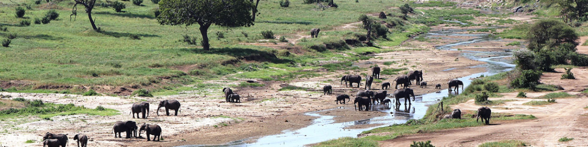 Terre-Authentic-Tours-&-Safaris-in-Tanzania
