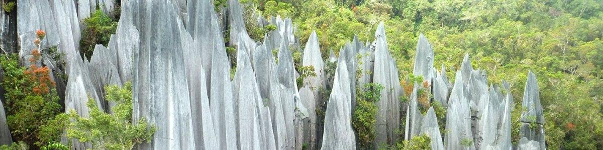 Borneo-Kenyalang-Experience-Tours-in-Malaysia