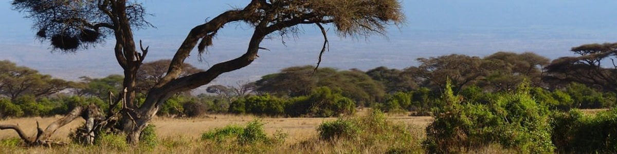 Lorna-Safaris-in-Kenya