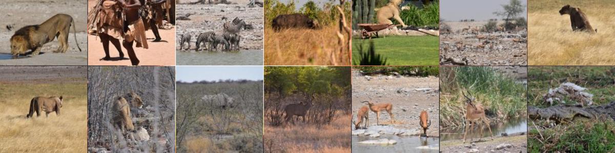 Pride-Safaris-Namibia-in-Namibia