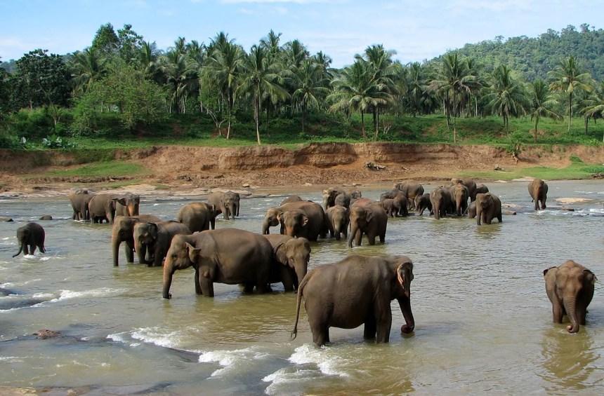 see elephant