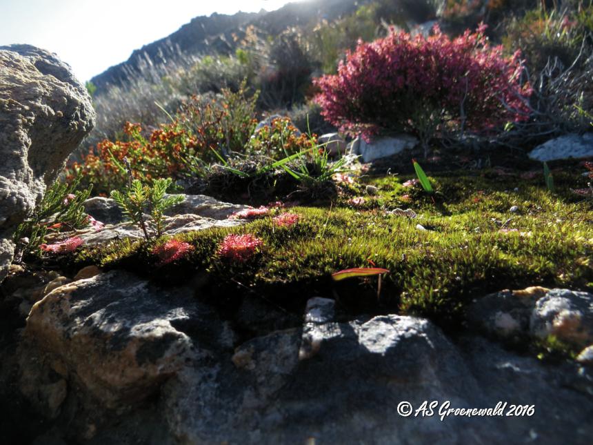 Rocky moss garden