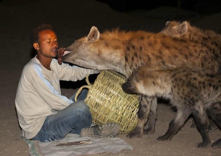 Man feeding hyenas at Harar