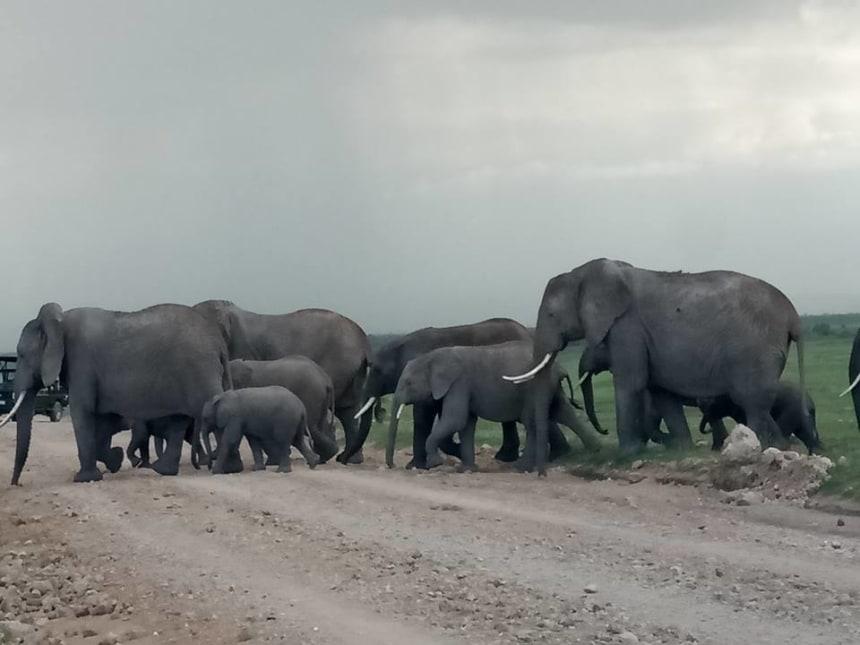 Elephant herds