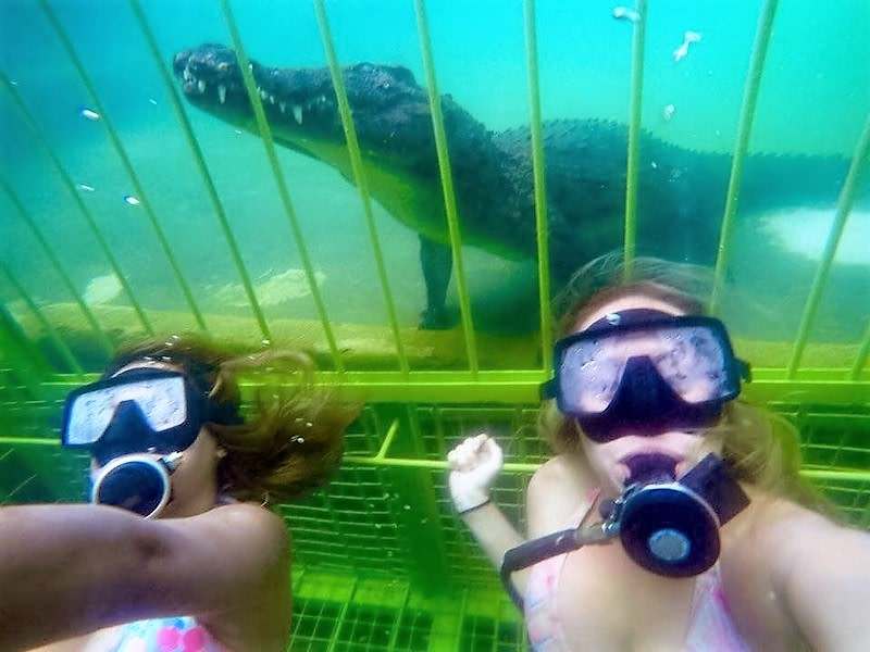 Crocodile Cage Dive