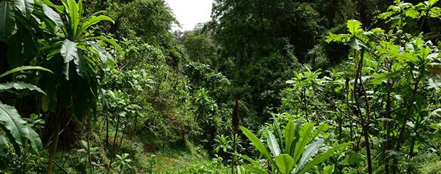 yirgalem forest