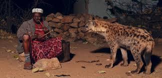 Hyena feeding in Harar