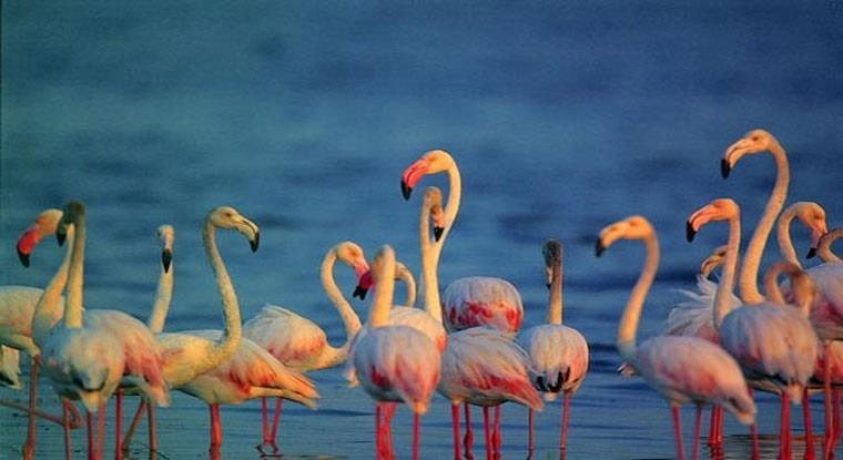 Flamingos at Bundala National Park