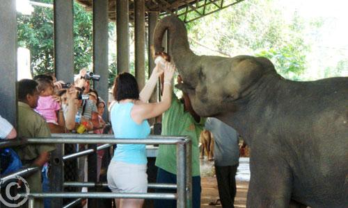 Chauffeur Tour Guides Srilanka
