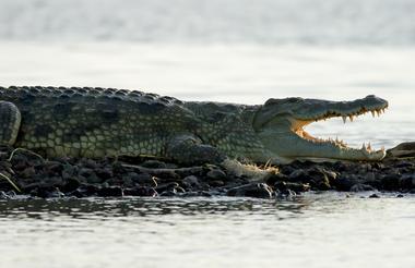 Crocodile market at Chamo lake in  Arba minch