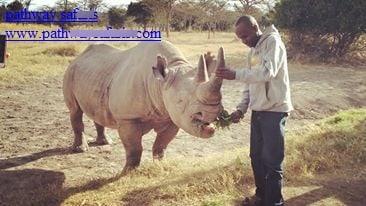 Feeding, Baraka the blind rhino
