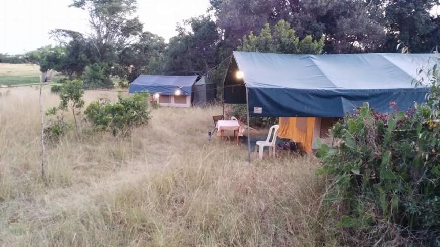 Tent stays