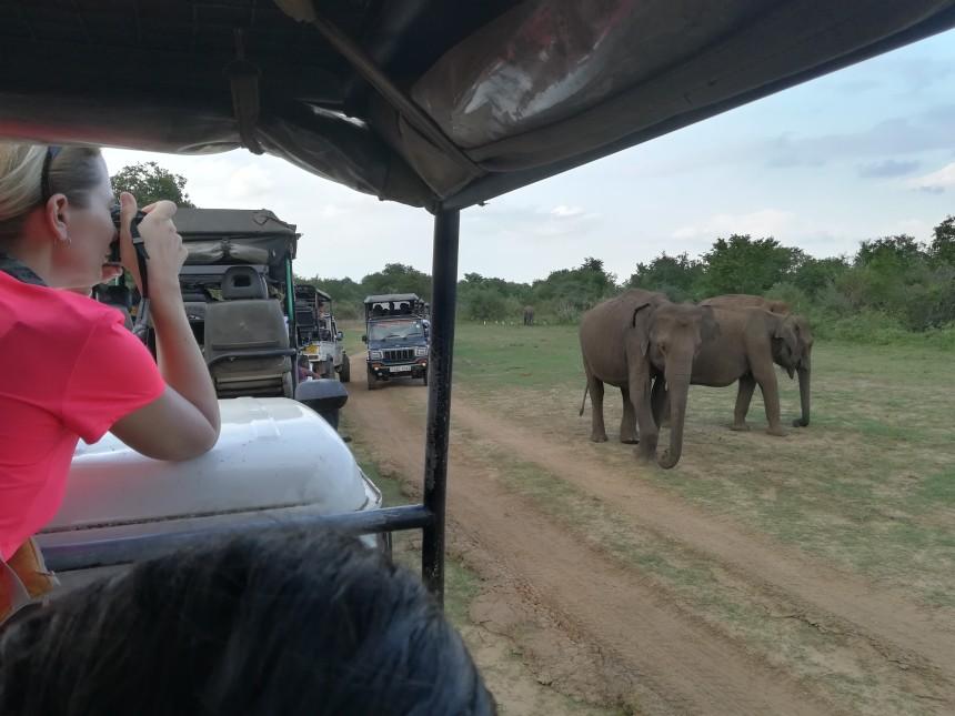 Elephants sighting