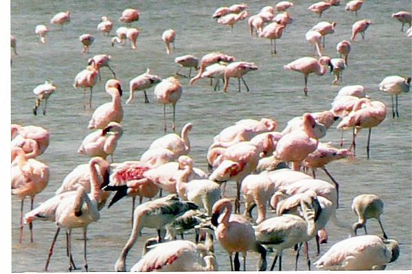 birds in Abiata-Shala National Park
