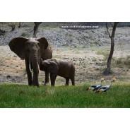 cisticola-birdingandnaturetoursineastafrica-nairobi-tour-operator