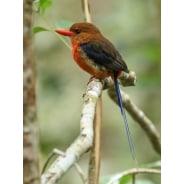 newguineanaturaltours-portmoresby-tour-operator