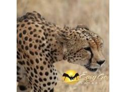 easygosafaris-nairobi-tour-operator