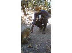lionoexperience-serrekunda-tour-operator