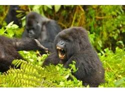 rwandanaturaltourscoltd-rwandagorillatrekkingoperators-kigali-tour-operator
