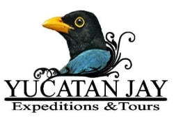 yucatanjay-valladolid-tour-operator