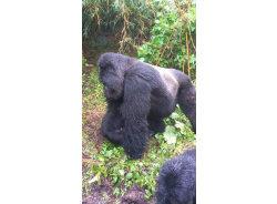 gorillamaniasafari-kigali-tour-operator
