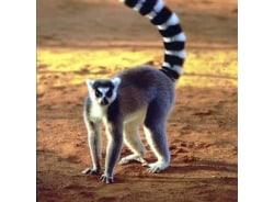 madagascartoursmanagers-antananarivo-tour-operator