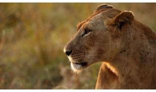 safaribliss-beaubassin-rosehill-tour-operator