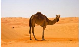 moroccoculture-marrakech-tour-operator
