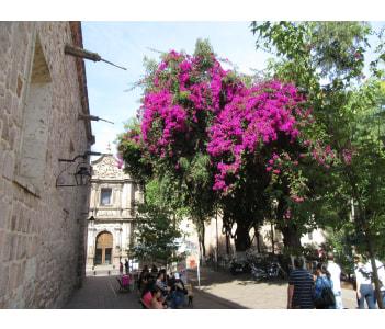 Convento de las Rosas