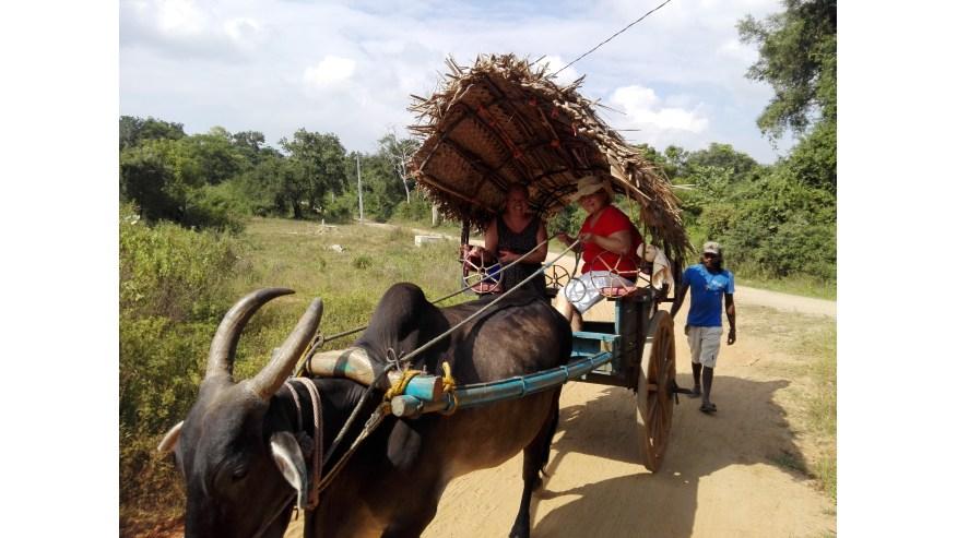 Experience a bullock cart ride