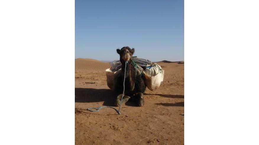 Spend a Night in the Sahara Desert