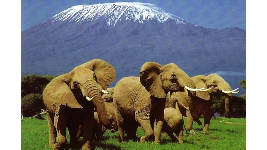 Increase Your Chances of Seeing the Big Five